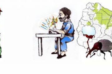 EL ALGODON, NO ES UN JUEGO DE TRUCO  Por Hipólito Ruiz