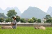 EL MERCADO AGRICOLA DEPENDERA DE CHINA