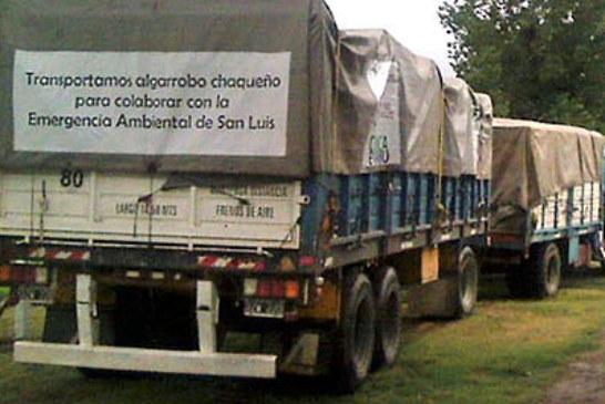ALGARROBOS DEL CHACO PARA RECUPERAR EL EQUILIBRIO HIDRICO EN SAN LUIS