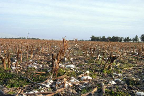 CHACO QUIERE QUE LA DESTRUCCION DE RASTROJO SEA CERTIFICADA POR AGRONOMOS
