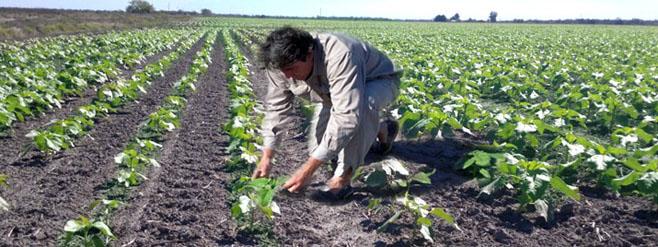 EL DEPARTAMENTO BROWN CON MEDIO MILLON DE HECTAREAS DE CULTIVOS – Informe especial para Agroperfiles por el ing agr Javier Lehonart.