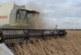 EL USDA RECORTA HASTA 43 MILLONES DE TONELADAS DE SOJA PARA ARGENTINA