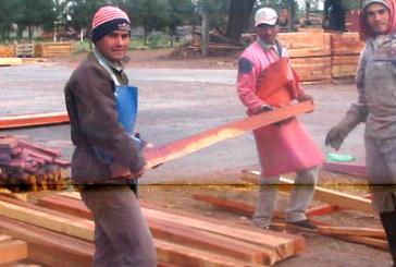 PRODUCCION DECLARO LA EMERGENCIA FORESTAL Y FORESTO INDUSTRIAL DEL CHACO