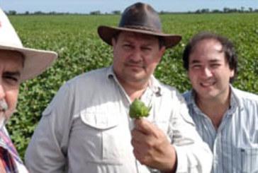 LOTE DEMOSTRATIVO DE ALGODON CON NUEVAS SEMILLAS: RECORRIDA OFICIAL ESTE JUEVES EN PARRA AGROPECUARIA
