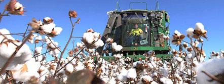 GARANTIZAN EN CHACO LAS EXENCIONES PARA LA ACTIVIDAD AGROPECUARIA