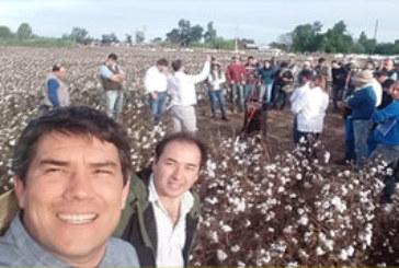 EL REY ALGODON BRILLA EN FERNANDEZ