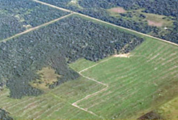 BOSQUES NATIVOS: 40 MILLONES DE PESOS DEL COFEMA PARA CHACO