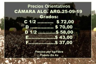 SE VA RECUPERANDO LA EXPORTACION DE FIBRA