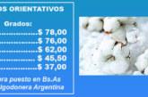 FIBRA DE ALGODON: DEMANDA SOSTENIDA PARA BUENAS CALIDADES
