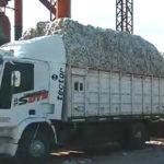 Algodón  EL PRIMER LOTE, SALIO DE QUITILIPI, CHACO