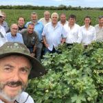 LA JOYITA DEL INTA MUESTRA SUS PRIMEROS PIMPOLLOS – Expectativas por la nueva variedad en algodón