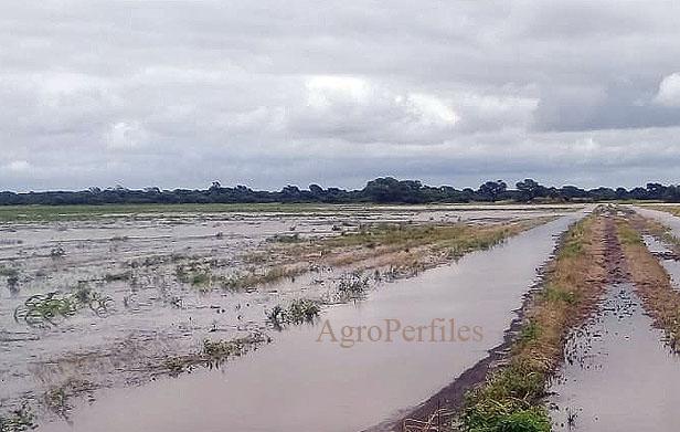 """PRODUCTORES CORTARAN LA RUTA 95 EN DU GRATY """"Estamos cansados que nos manden el agua a nuestros campos"""", dicen"""
